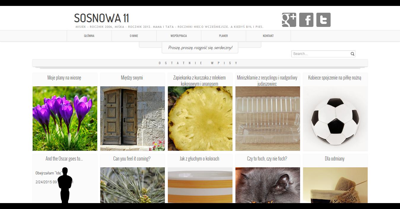 Blog sosnowa11